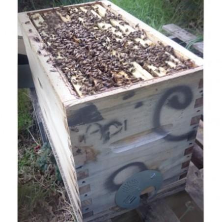 Ruchette peuplée d'abeilles Frère Adam de l'année en Dadant / Warre