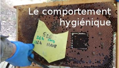 Le comportement hygiénique des essaims d'abeilles
