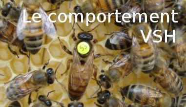 Le comportement VSH des essaims d'abeilles