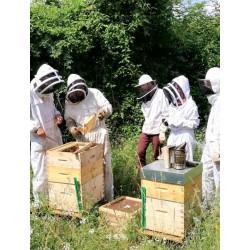 Parrainage ruche entreprises