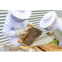 Installation ruches...