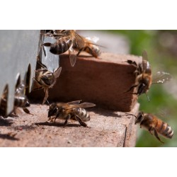 Location de ruche pollinisation entreprise Essonne Yvelines