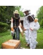 Formation et stage en apiculture en Ile de France