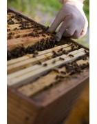 Acheter du miels, de la cire et du pollen produits en Essonne Yvelines